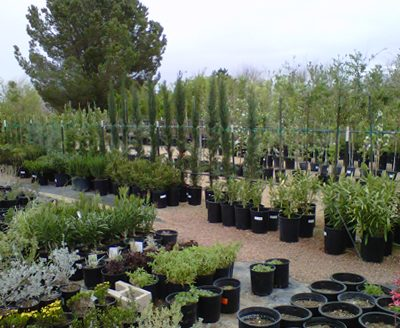Nursery Goods Accessories For Managing An Analysis On The Increase Of Plants and Bushes