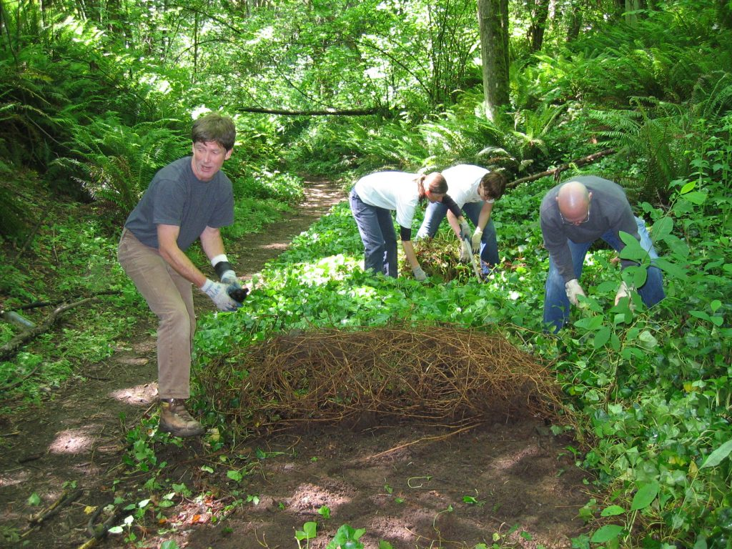 Tips For Maintaining Healthy Trees & Green Atmosphere