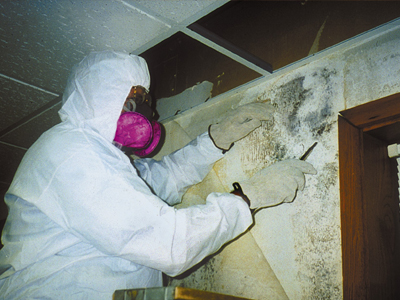 Why Mold Remediation Is Extremely Important